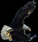 Eagle Accounts Group, Inc.